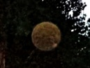 daylight-orb